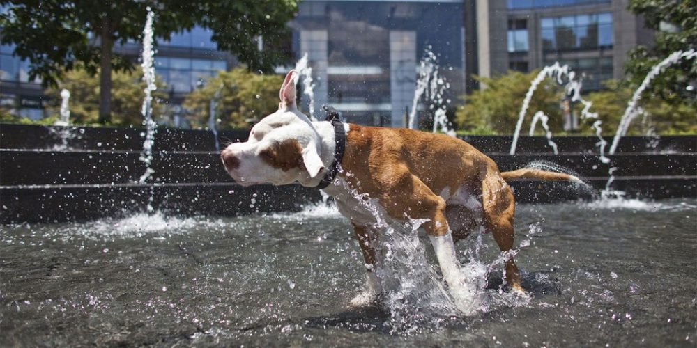 How to Stay Cool in Warm Weather – especially in Athens
